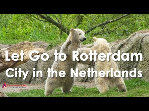 Rotterdam City in the Netherlands Travel & Tourism Video