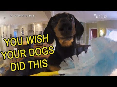 Funny Dogs Home Alone! Caught on Furbo Dog Camera!