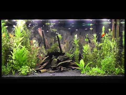 led aquarium beleuchtung daytime cluster control mit tageslichtsimulator 39 easy time controll. Black Bedroom Furniture Sets. Home Design Ideas