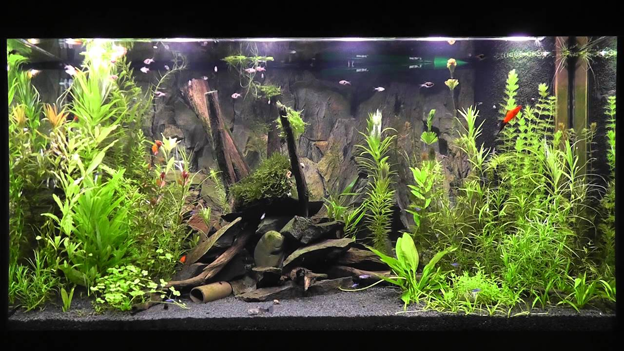 Led Aquarium Beleuchtung Daytime Cluster Control Mit Tageslichtsimulator Easy Time Controll Youtube