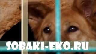 НОРА - Собаки из приюта___приют-щербинка.рф
