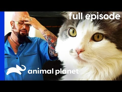 'Vicious' Cat Chases Owners Around Their House | My Cat From Hell (Full Episode)