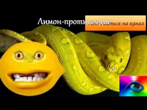 Лимон: польза и вред для здоровья человека