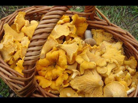 Как вкусно заготовить жареные грибы. Заготовка на зиму лисичек.