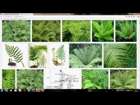 Лекарственные растения и травы, народная медицина