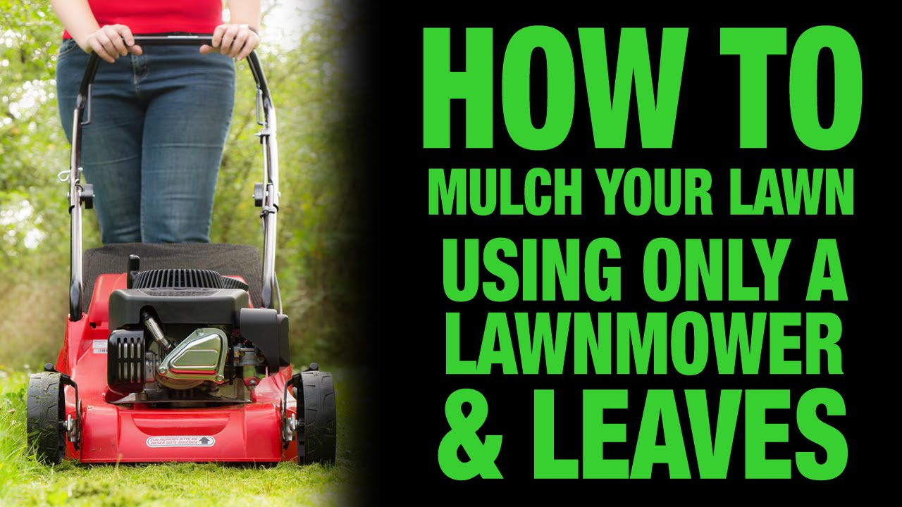 How To Mulch Your Lawn Using Only A Lawnmower And Leaves Youtube