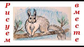 Рисуем животных. Как нарисовать белку. How to Draw a squirrel(Уроки рисования для детей. Учимся рисовать животных, людей, машины, мультяшных героев. Рисуем и раскрашивае..., 2016-02-05T18:01:41.000Z)