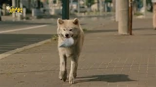 Gambar cover 狗狗每天给主人叼食物,却不知道主人已经去世半年,感人至深