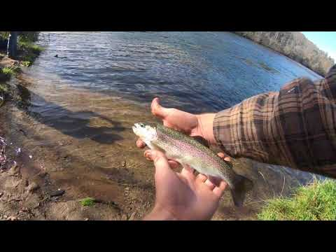 TENNESSEE EPISODE#2 EPIC TROUT FISHING (EAST TENNESSEE HIWASSEE RIVER)