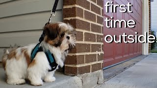 SHIH TZU PUPPY FIRST TIME GOING OUTSIDE!!