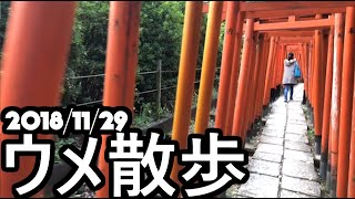 [BeasTV] ウメ散歩/Daigo's Stroll