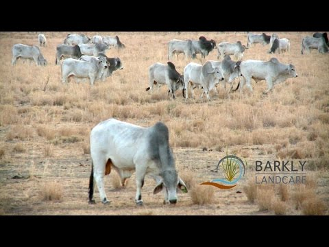 Newcastle Waters Grazing Workshop  - Barkly Landcare