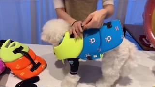 퍼피엔젤 강아지 구명조끼 착용법  PUPPYANGEL …