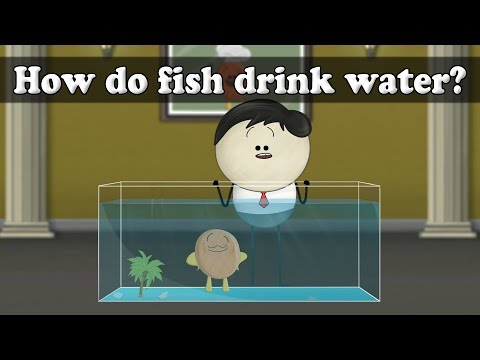 Osmosis - How Do Fish Drink Water? | #aumsum