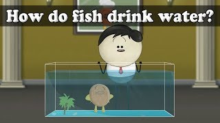 Osmosis - How do fish drink water?   #aumsum
