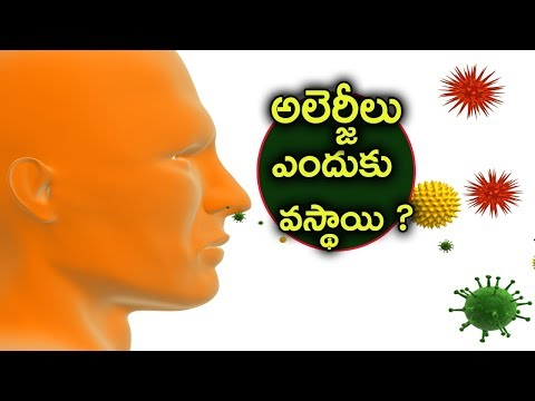 Why do we get allergies in telugu | reason for allergy | Telugu Talk Box