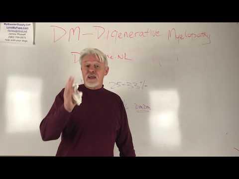 The DM Hoax In French Bulldogs Degenerative Myelopathy
