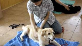 Dog Massage Training Course 07/04/2010/tečaj Masaže Psov 04. 07. 2010