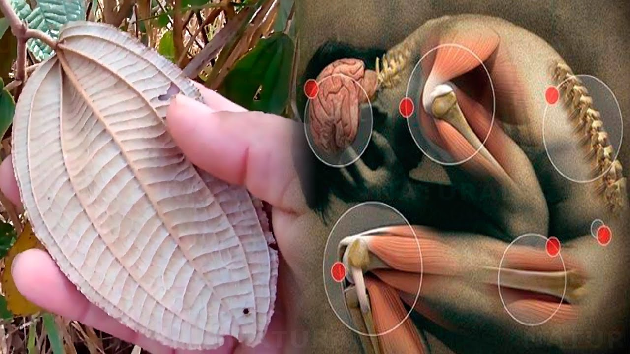 This Miracle Herb Will Help Restore Your Back and Knees