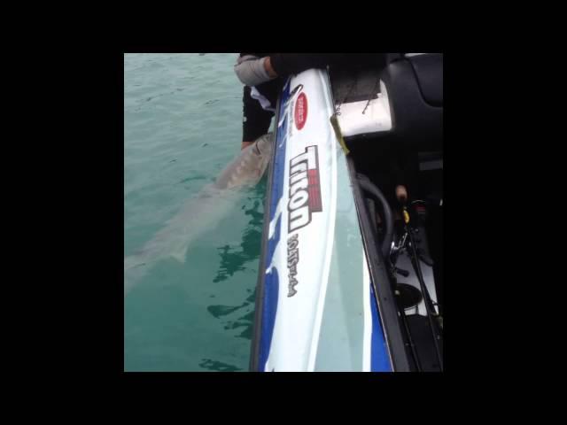 Art of Fishing Guide Service: Lake St. Clair Sturgeon Fishing