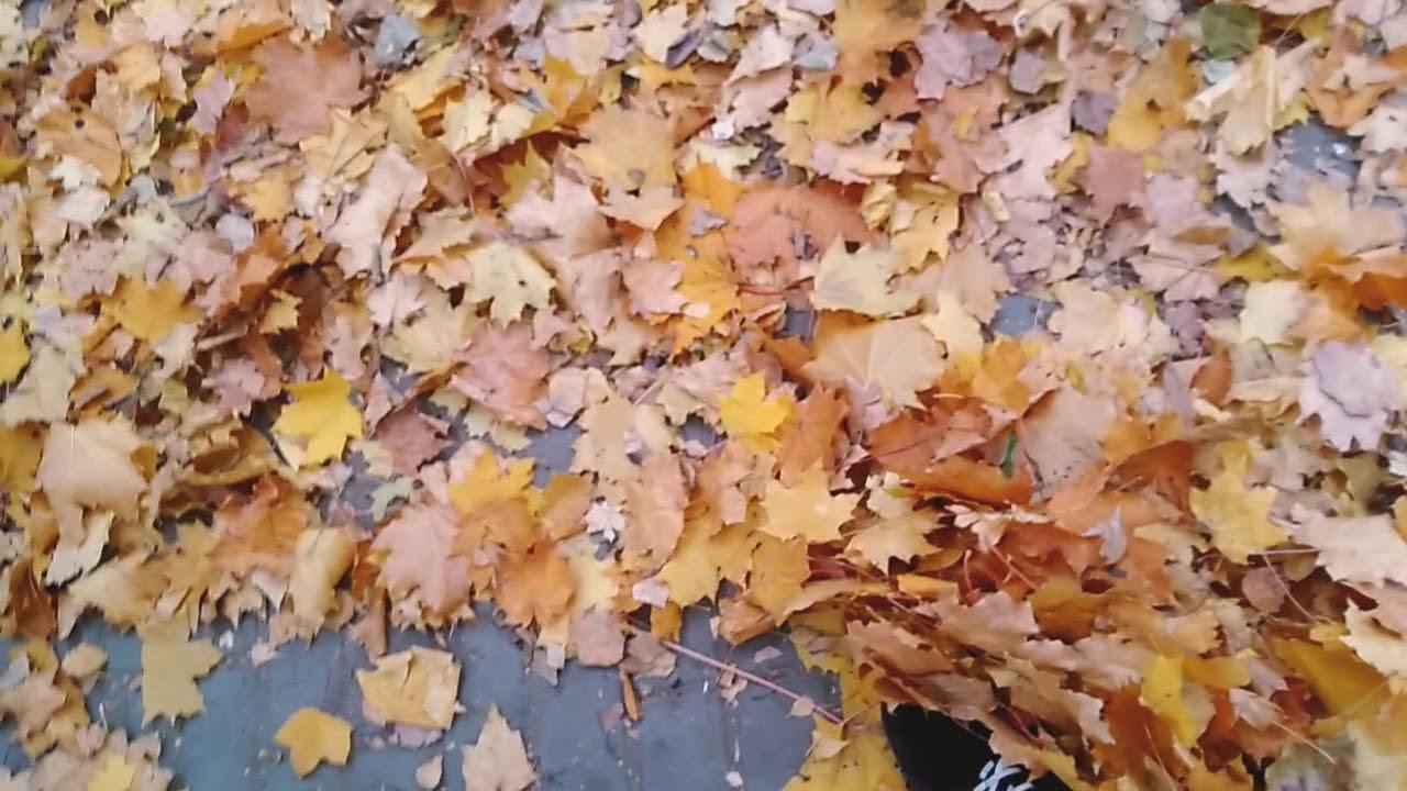 картинки ура осень