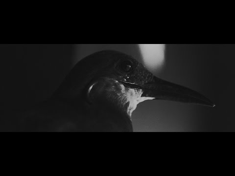 Клип Ассаи - Унижать и любить