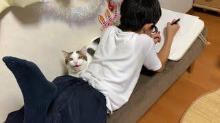 結局、息子のところへ戻る猫