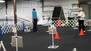 Rally Obedience Novice A Show And Go