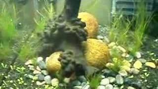My Freshwater 25l Nano Aquarium