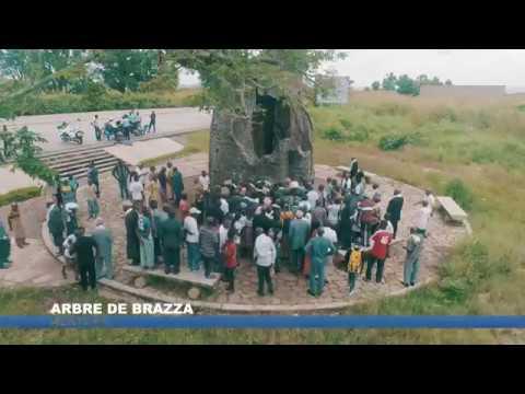 Arbre DeBrazza - République du Congo – Afrique Centrale