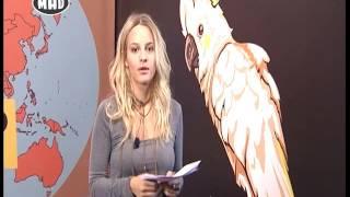 ❅ Loca Report στο Μad TV ❅ (18/10/16)