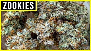 zOOKIES STRAIN REVIEW