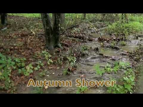 Nature of Fall   5 Minutes of Peace *Extended Edition*   NC Nature News