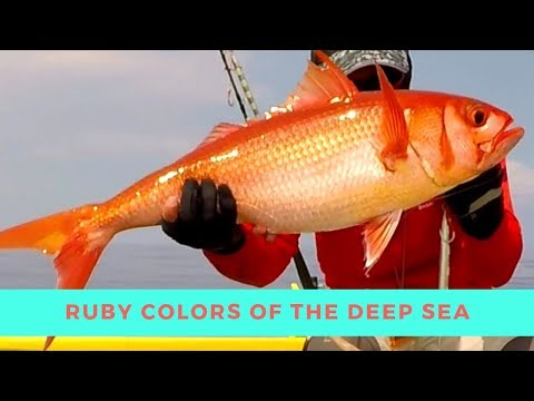 RUBY Snapper COLORS The Deep Blue Sea