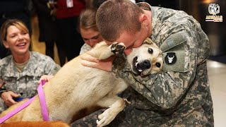 Military Dogs Reunited with Their Handlers Inspirational Reunions (You Haven't Seen)