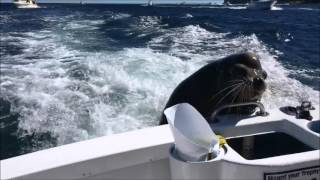Pancho the Sea Lion Steals our Huge Fish!!! | Life's Perfect Moments
