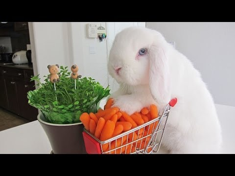 Bunny loads shopping cart with carrots!
