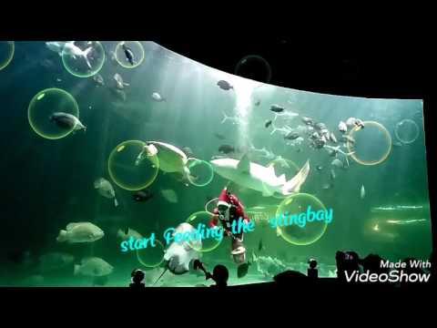 #Vlog Py① ThailanD SongkhlA AquariuM