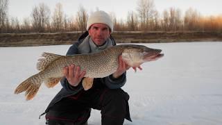 Рыбалка на щуку  по первому льду 2017  Жерлицы и крупные щуки.