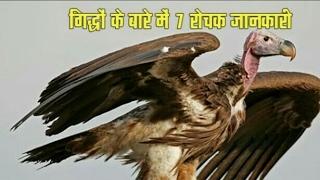 गिद्धों के बारे में रोचक जानकारी, Amazing Vultures