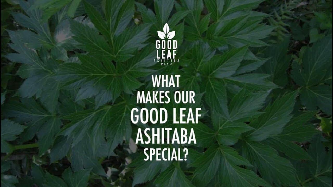 how to use ashitaba leaf