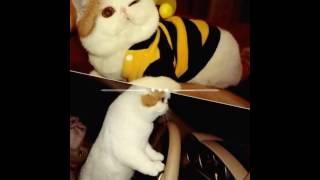 Котята Snoopy(=^.^=)