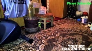 Кот Кеша - любимый стул кота / funny cats