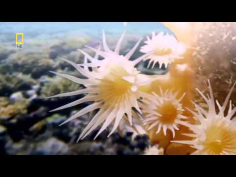 National Geographic Documentary - Pacific Ocean Paradise - Save the World's Oceans - Fishing Tv HD