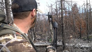 HUNTING A BUGLING BULL IN COLORADO  - EP 24 - LAND OF THE FREE