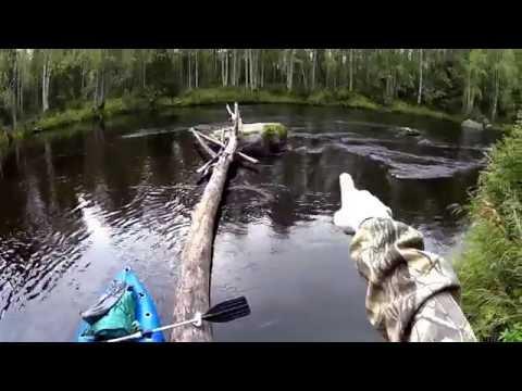 2/3 Сплав р.Кепа (Карелия). 2й день: медведи, лоси, порог Юма.