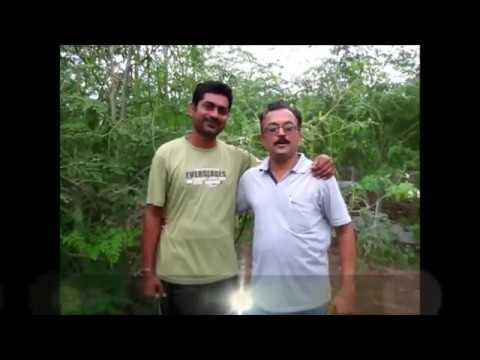 Moringa plantation in maharashtra
