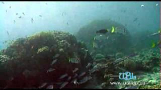 Дайвинг в Египте. Остров Фараонов.(Видео дайвинга в Египте возле Острова Фараонов. Больше видео и информации о дайвинге и подводной охоте..., 2014-04-10T07:29:30.000Z)