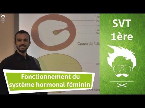 Description du fonctionnement du système hormonal féminin de reproduction