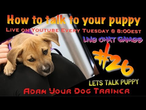 How to talk to your Puppy!! Live Chat #26
